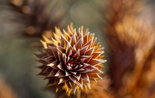 Close up photo of brown spiny plant with sharp angled leaves.