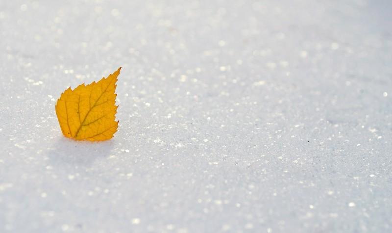 Orange leaf frozen in white block of ice snow crystals.